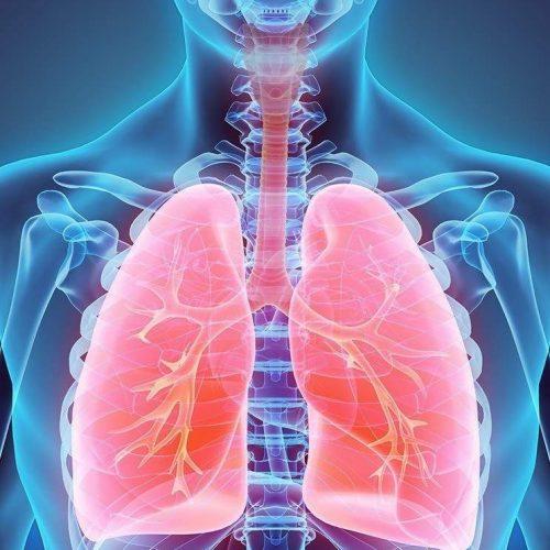 Pulmones tratamiento de fisioterapia respiratoria en Málaga. FISUMA Salud